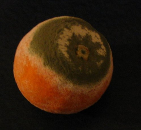 The Earth is an orange, overpopulated with mould...